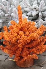 sapin floqué orange