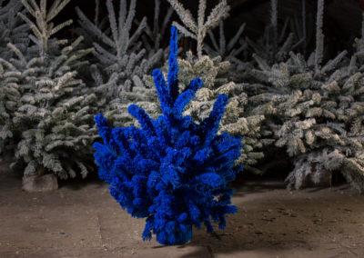 sapin-floqué-bleu-dur