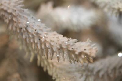 détail-sapin-givré-blanc
